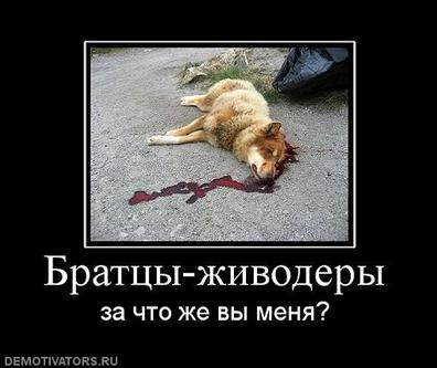 435026_brattsyi-zhivoderyi.jpg