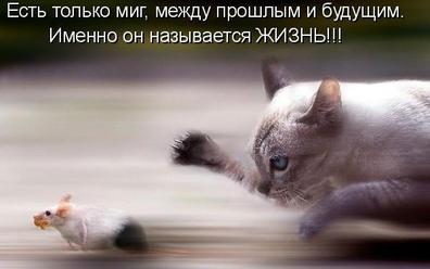 """""""Крысы"""" бегут"""